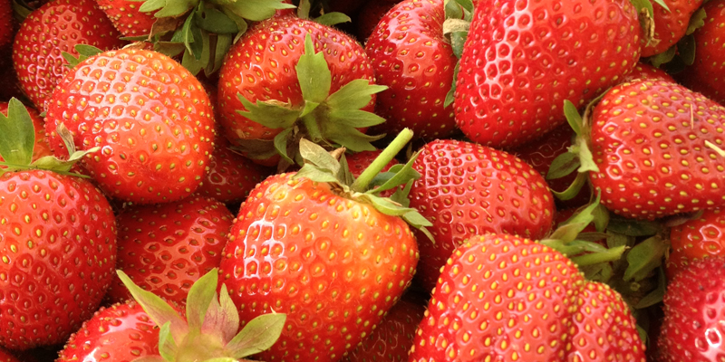 so gesund sind erdbeeren erdbeeren rikon