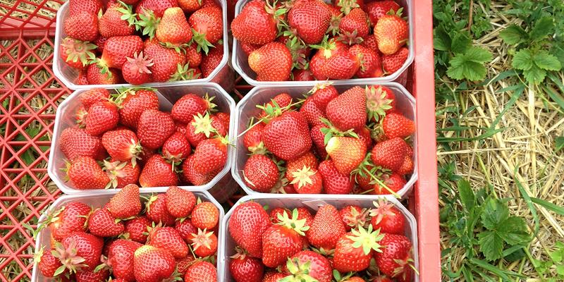 erdbeeren-kistchen