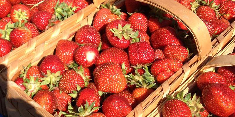 gepflueckte-erdbeeren